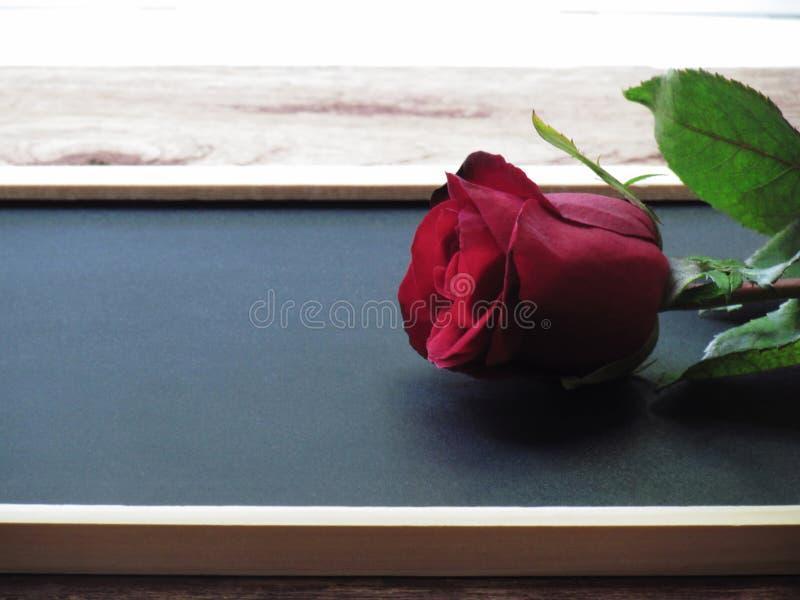 Κλείστε επάνω κόκκινο αυξήθηκε τοποθετημένος στον πίνακα στο ξύλινο πάτωμα στοκ εικόνες με δικαίωμα ελεύθερης χρήσης