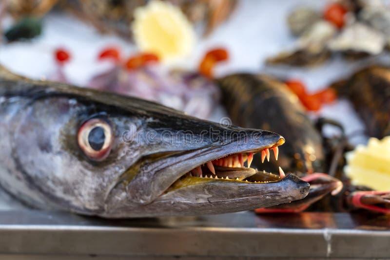 Κλείστε επάνω στα δόντια barracuda Φρέσκο barracuda ψαριών θάλασσας στην αγορά τροφίμων οδών Έννοια θαλασσινών Ακατέργαστο barrac στοκ εικόνες
