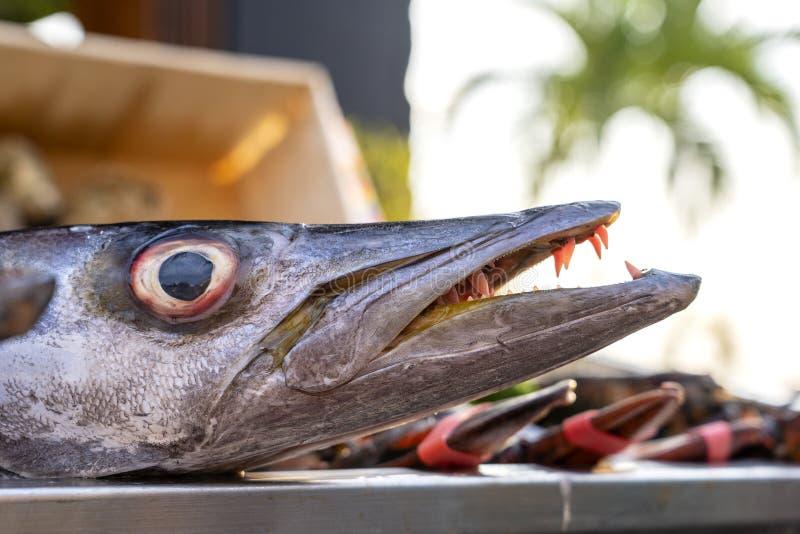 Κλείστε επάνω στα δόντια barracuda Φρέσκο barracuda ψαριών θάλασσας στην αγορά τροφίμων οδών r Ακατέργαστο barracuda για το μαγεί στοκ εικόνες