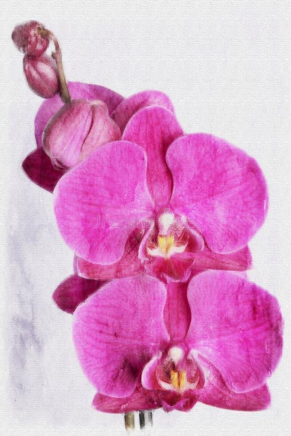 Κλείστε επάνω τα ζωηρόχρωμα λουλούδια ορχιδεών ελεύθερη απεικόνιση δικαιώματος