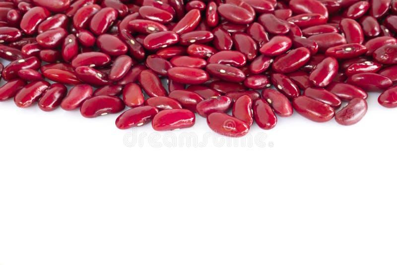 Κλείστε επάνω τα κόκκινα φασόλια νεφρών που απομονώνονται στο άσπρο υπόβαθρο με τη διαστημική, υγιή έννοια τροφίμων αντιγράφων στοκ φωτογραφίες