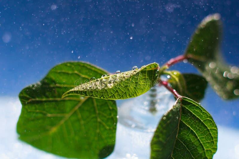 Κλείστε επάνω τα φύλλα με τις μακρο πτώσεις στοκ εικόνα