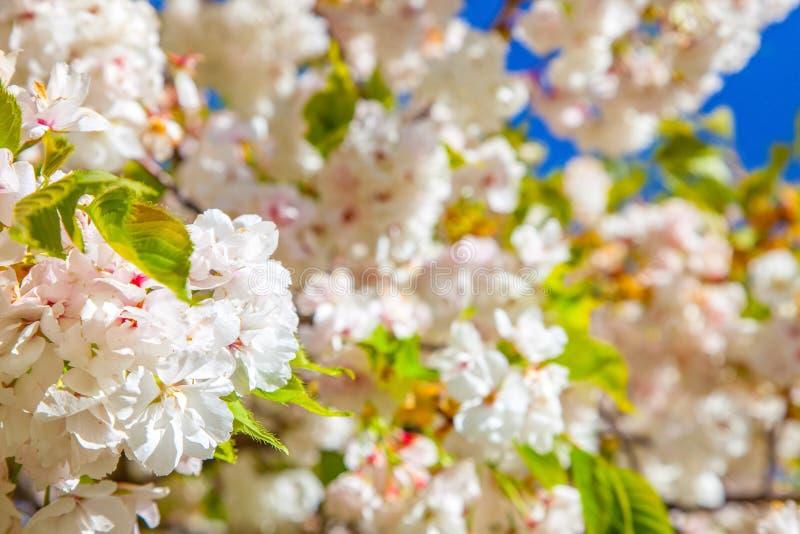 κλείστε επάνω την άποψη της χαρωπής άνθισης δέντρων στοκ φωτογραφία με δικαίωμα ελεύθερης χρήσης