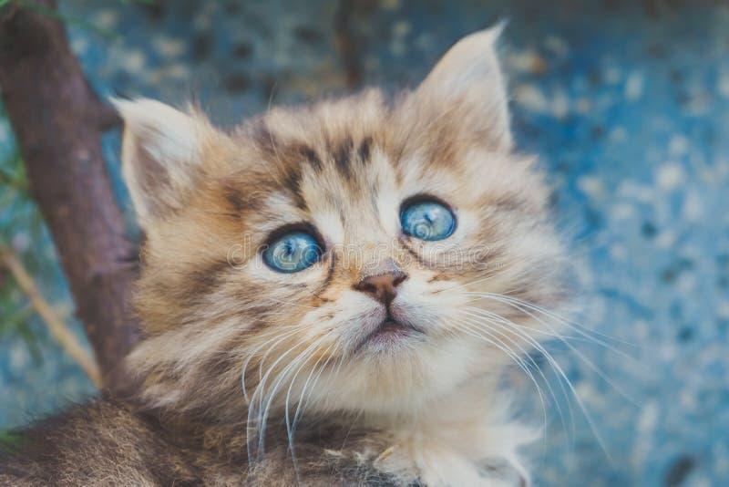 Κλείστε επάνω την άποψη του χαριτωμένου γατακιού με τα μπλε μάτια Τιγρέ γάτα Κατοικίδια ζώα και έννοια τρόπου ζωής στοκ φωτογραφία