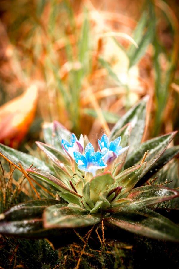 Κλείστε επάνω την εικόνα του όμορφου άγριου υπερφυσικού χρώματος λουλουδιών στοκ εικόνα