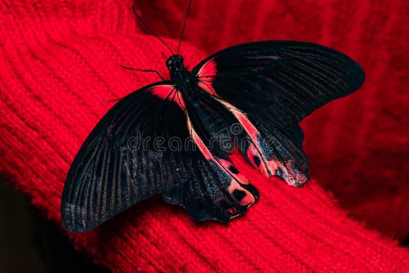 Κλείστε επάνω την πεταλούδα σε ετοιμότητα γυναικών Ομορφιά της φύσης στοκ εικόνα με δικαίωμα ελεύθερης χρήσης