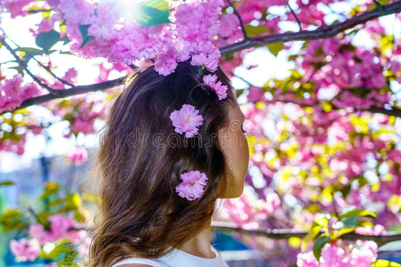 Κλείστε επάνω την τρίχα του κοριτσιού από την πλάτη με τα ρόδινα λουλούδια στην τρίχα της με το δέντρο sakura ανθών στο υπόβαθρο στοκ εικόνα με δικαίωμα ελεύθερης χρήσης