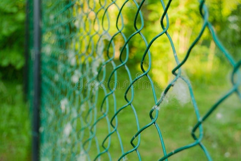 Κλείστε επάνω της αλυσίδα-σύνδεσης μετάλλων στον κήπο Φράκτης καλωδίων πλέγματος διαμαντιών στο θολωμένο πράσινο υπόβαθρο Κιγκλίδ στοκ φωτογραφίες με δικαίωμα ελεύθερης χρήσης