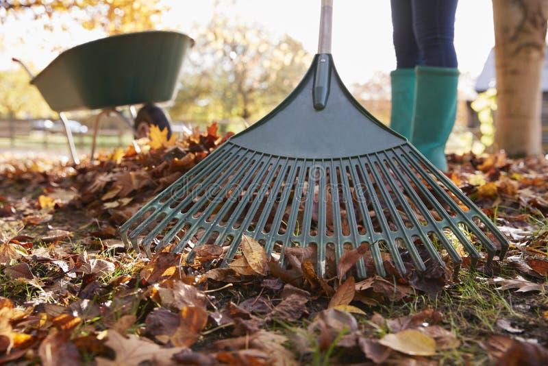 Κλείστε επάνω της γυναίκας που μαζεύει με τη τσουγκράνα τα φύλλα φθινοπώρου στον κήπο στοκ εικόνες