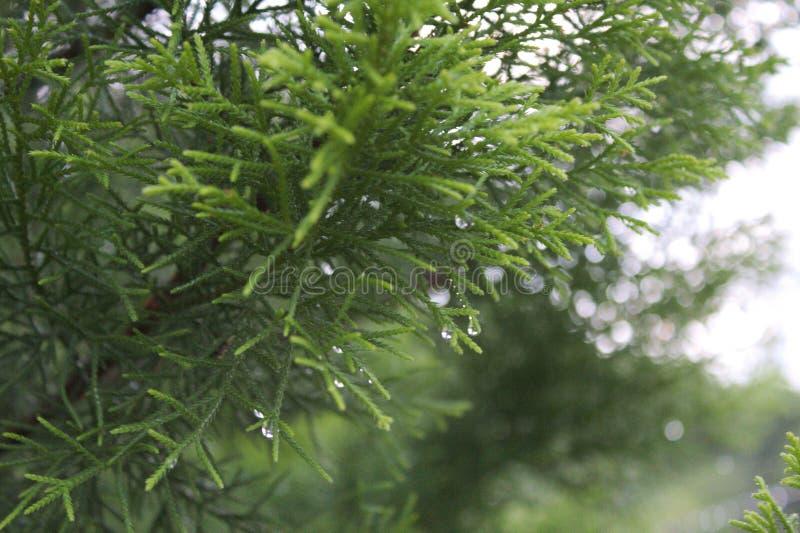 Κλείστε επάνω της θαμνώδους περιοχής στον κήπο στοκ εικόνες