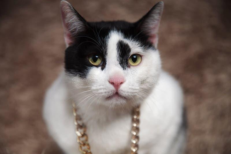 Κλείστε επάνω της λατρευτής γάτας metis φορώντας το χρυσό περιλαίμιο στοκ φωτογραφίες