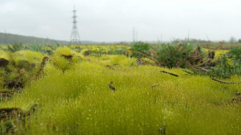 Κλείστε επάνω της φρέσκιας παχιάς χλόης με τις πτώσεις νερού στα ξημερώματα Φρέσκια πράσινη χλόη με την κινηματογράφηση σε πρώτο  στοκ εικόνα