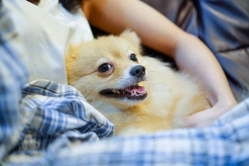 κλείστε επάνω τη γυναίκα που αγκαλιάζει το σκυλί στο δωμάτιο Νεαρό άτομο με τον ελεύθερο χρόνο σκυλιών στο σπίτι, ευτυχής στιγμή στοκ φωτογραφίες