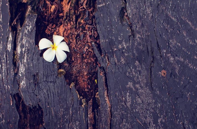 Κλείστε επάνω τη σύσταση της ξύλινης χρήσης ως φυσικό υπόβαθρο στοκ εικόνες