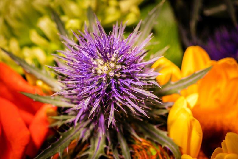 Κλείστε επάνω τη φωτογραφία σε ένα λουλούδι σε ένα bouqet στοκ εικόνες