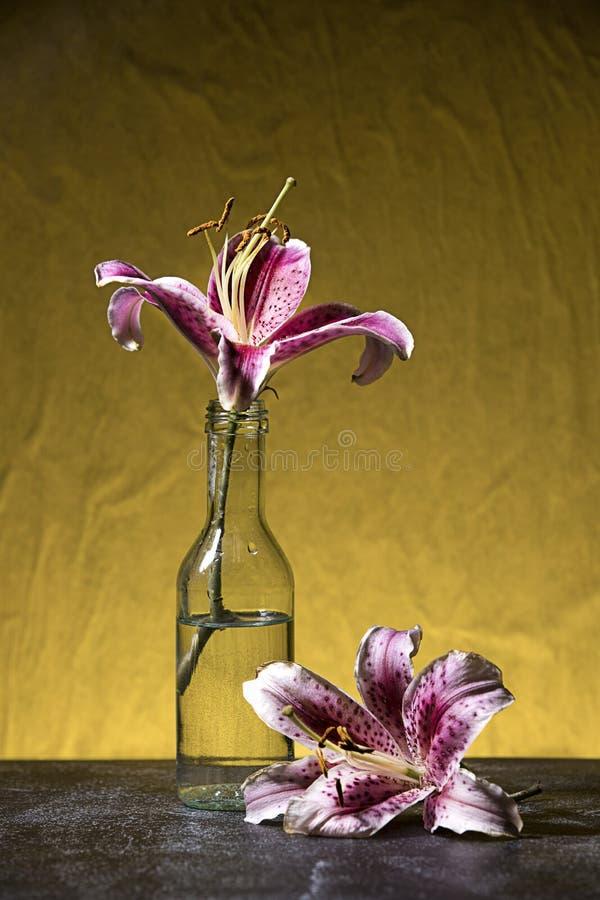 Κλείστε επάνω τη φωτογραφία στούντιο των lillies στοκ εικόνες με δικαίωμα ελεύθερης χρήσης