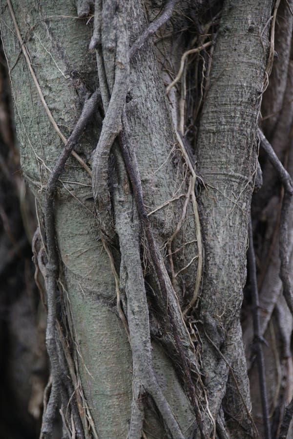 Κλείστε επάνω τις ρίζες του δέντρου στοκ εικόνες με δικαίωμα ελεύθερης χρήσης