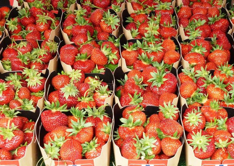 Κλείστε επάνω τις φράουλες στα χαρτοκιβώτια εγγράφου στοκ εικόνες