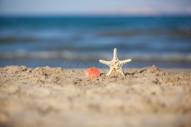 Κλείστε επάνω του αστερία και των θαλασσινών κοχυλιών στην άμμο παραλιών στοκ εικόνες