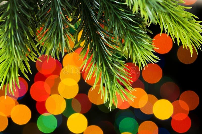 Κλείστε επάνω του δέντρου στοκ φωτογραφία με δικαίωμα ελεύθερης χρήσης
