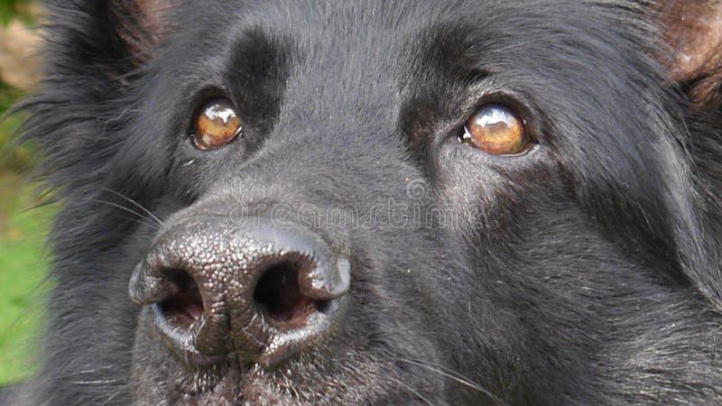 Κλείστε επάνω του νέου προσώπου σκυλιών στοκ φωτογραφία με δικαίωμα ελεύθερης χρήσης