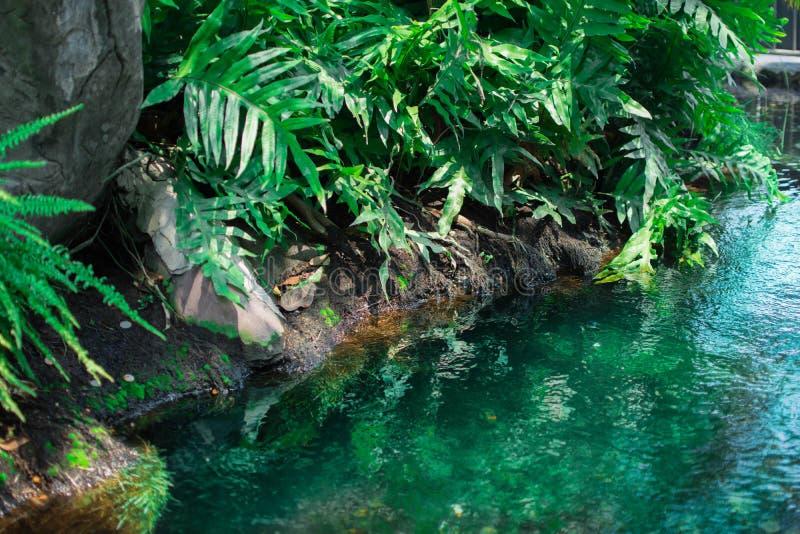 Κλείστε επάνω του ποταμού βουνών που διατρέχει του πράσινου δάσους στοκ εικόνες με δικαίωμα ελεύθερης χρήσης