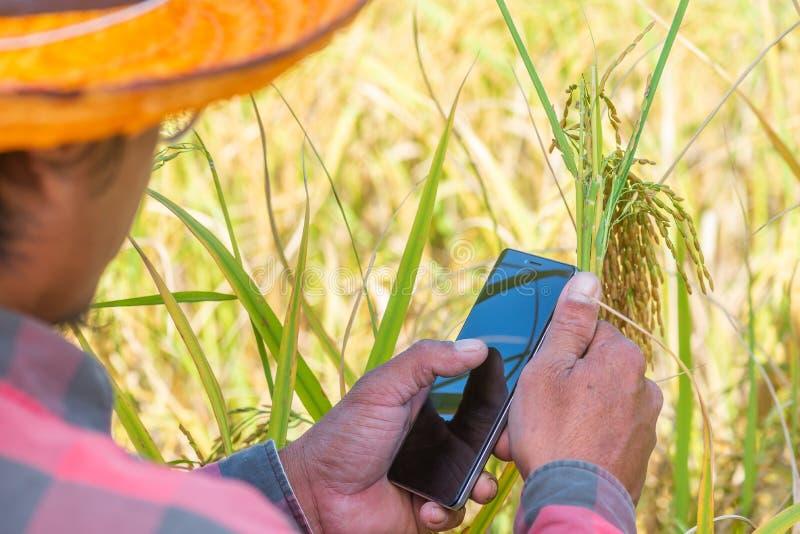 Κλείστε επάνω του χεριού της Farmer χρησιμοποιώντας το κινητό τηλέφωνο ή της ταμπλέτας που στέκεται μέσα στοκ φωτογραφία με δικαίωμα ελεύθερης χρήσης