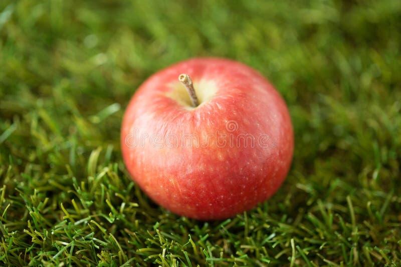 Κλείστε επάνω του ώριμου κόκκινου μήλου στην τεχνητή χλόη στοκ φωτογραφία