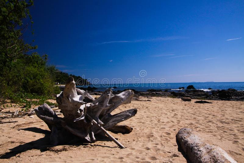 Κλείστε επάνω του driftwood ενάντια στο μπλε ουρανό στη μόνη παραλία στο τροπικό νησί Ko Lanta, Ταϊλάνδη στοκ εικόνες