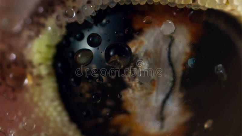 Κλείστε επάνω του rangei Palmatogecko Pachydactylus, επίσης γνωστού ως Web-footed Gecko, ένα νυκτερινό gecko ενδημικό στην έρημο  στοκ εικόνες