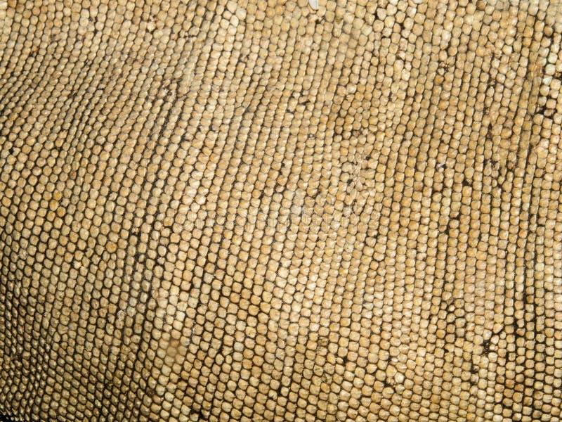 Κλείστε επάνω το δέρμα ενός πράσινου iguana στοκ φωτογραφίες με δικαίωμα ελεύθερης χρήσης