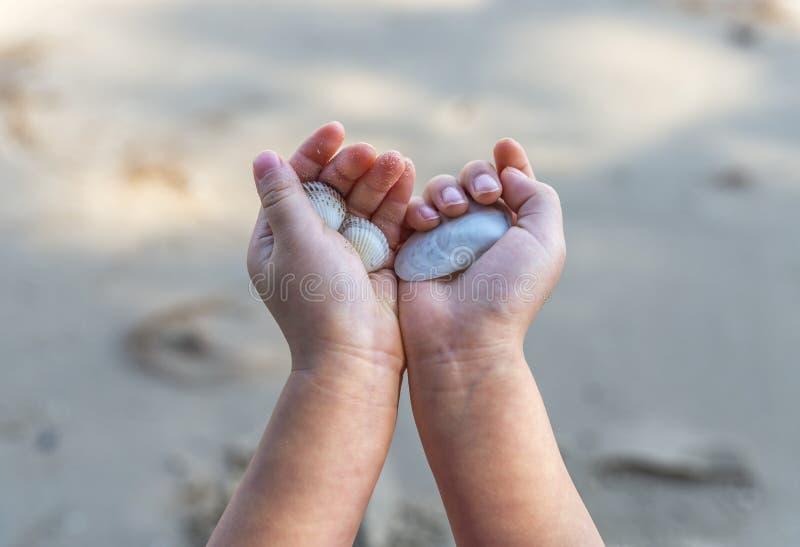 Κλείστε επάνω το θαλασσινό κοχύλι εκμετάλλευσης χεριών παιδιών ` s στοκ εικόνα
