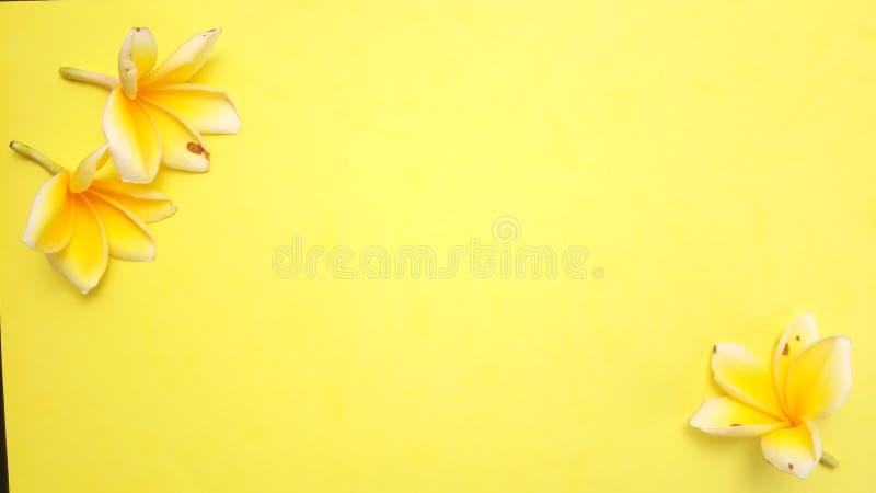 Κλείστε επάνω το κίτρινο υπόβαθρο με Frangipani, σχέδιο στοιχείων για το μήνυμα, απόσπασμα, τοποθέτηση κειμένων πληροφοριών στοκ εικόνες με δικαίωμα ελεύθερης χρήσης