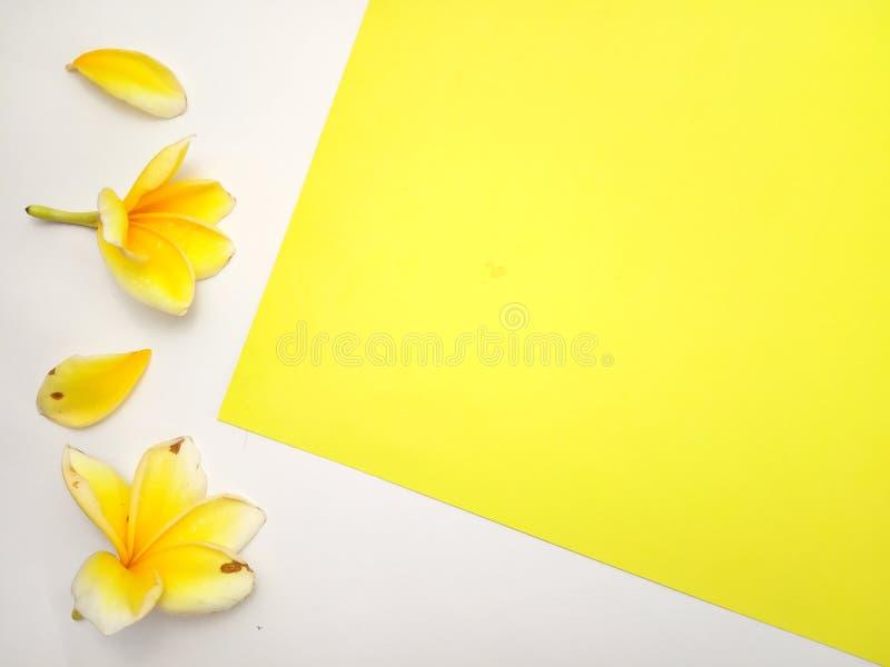 Κλείστε επάνω το κίτρινο υπόβαθρο με Frangipani, σχέδιο στοιχείων για το μήνυμα, απόσπασμα, τοποθέτηση κειμένων πληροφοριών στοκ φωτογραφία με δικαίωμα ελεύθερης χρήσης
