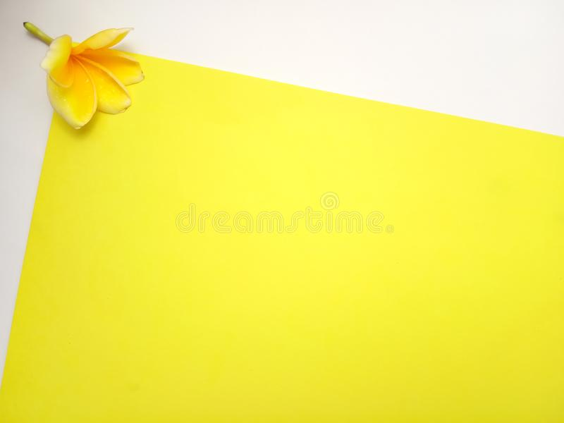 Κλείστε επάνω το κίτρινο υπόβαθρο με Frangipani, σχέδιο στοιχείων για το μήνυμα, απόσπασμα, τοποθέτηση κειμένων πληροφοριών στοκ φωτογραφίες με δικαίωμα ελεύθερης χρήσης