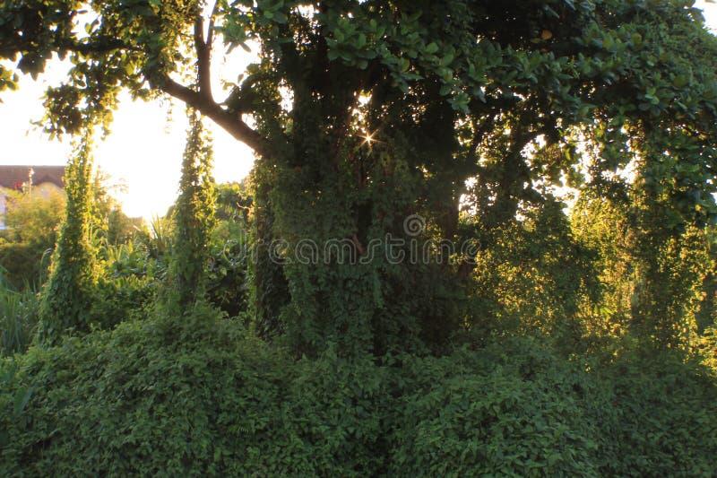 Κλείστε επάνω το Μπους κοντά στο τροπικό δάσος ποταμών στοκ φωτογραφία με δικαίωμα ελεύθερης χρήσης