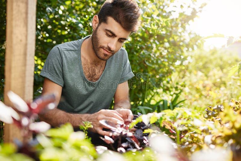 Κλείστε επάνω το πορτρέτο του νέου όμορφου καυκάσιου ατόμου στην μπλε μπλούζα που συγκεντρώνεται να εργαστεί στον κήπο επαρχίας τ στοκ φωτογραφίες με δικαίωμα ελεύθερης χρήσης