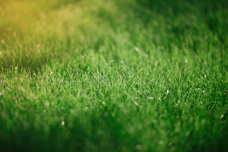 Κλείστε επάνω το πράσινο υπόβαθρο χλόης Θερινή έννοια, συνομιλία περιβάλλοντος στοκ εικόνες με δικαίωμα ελεύθερης χρήσης