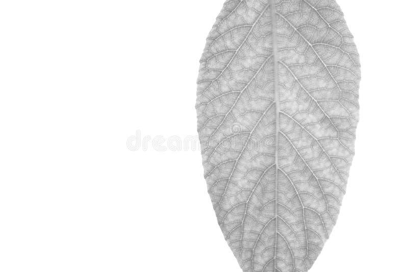 Κλείστε επάνω των γραπτών φύλλων, δείτε τις λεπτομέρειες των ινών στο άσπρο υπόβαθρο στοκ φωτογραφία