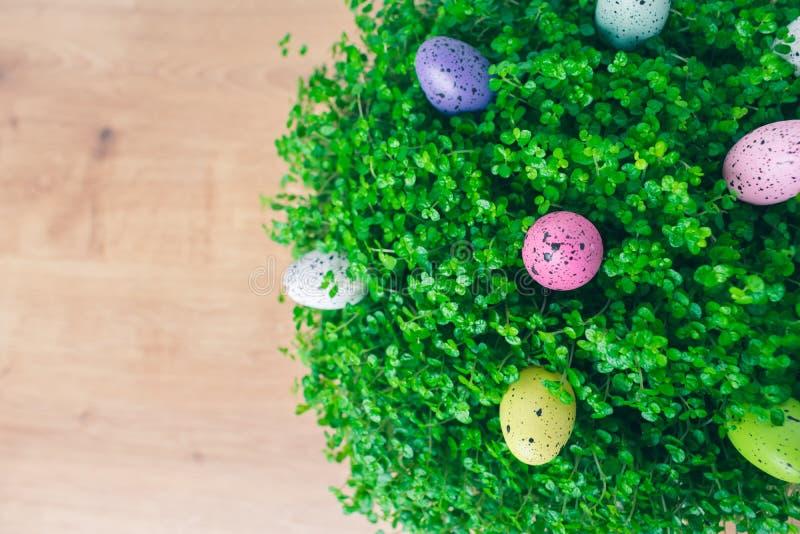 Κλείστε επάνω των εγκαταστάσεων δακρυ'ων ενός πράσινου μωρού με τις ζωηρόχρωμες διαστιγμένες διακοσμήσεις αυγών Πάσχας ορτυκιών π στοκ φωτογραφίες με δικαίωμα ελεύθερης χρήσης