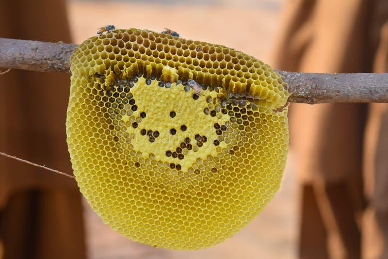 Κλείστε επάνω των μελισσών μελιού στη χτένα μελιού στοκ φωτογραφία με δικαίωμα ελεύθερης χρήσης
