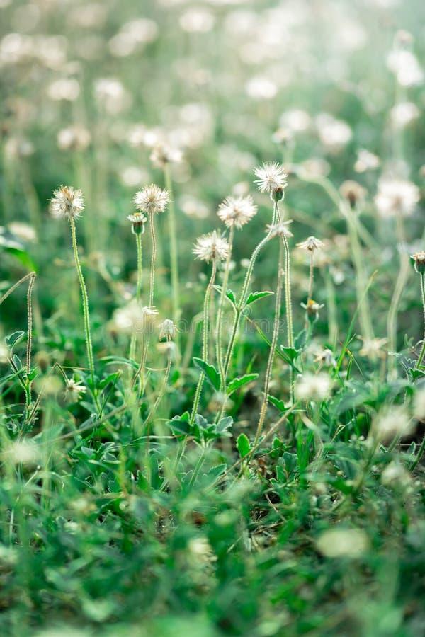 Κλείστε επάνω των μικρών λουλουδιών στον τομέα στοκ εικόνες με δικαίωμα ελεύθερης χρήσης