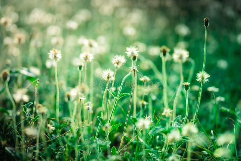 Κλείστε επάνω των μικρών λουλουδιών στον τομέα στοκ εικόνες
