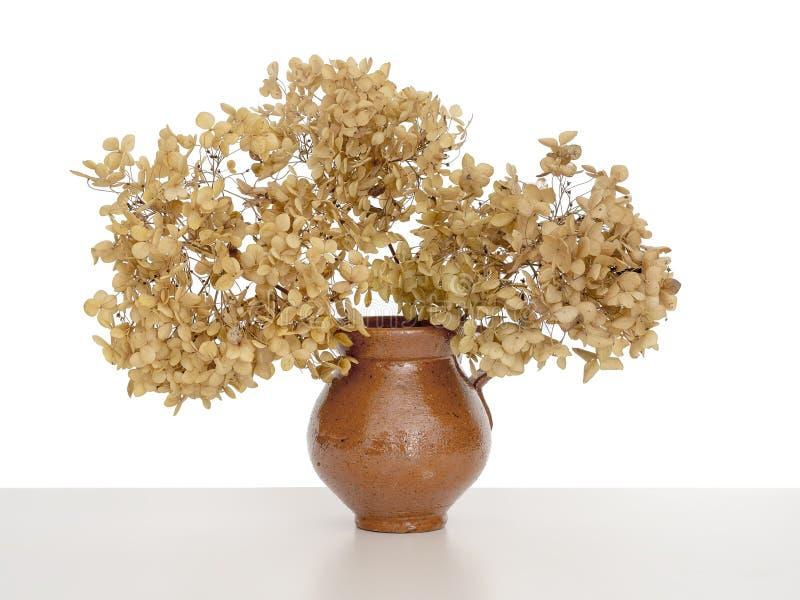 Κλείστε επάνω των ξηρών λουλουδιών hydrangea σε ένα βάζο, που απομονώνεται στο λευκό πίσω στοκ φωτογραφία