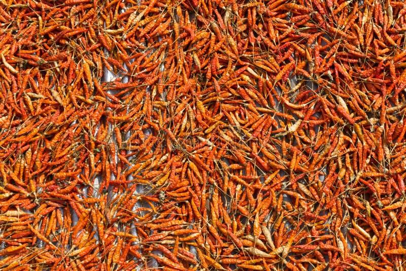 Κλείστε επάνω των ξηρών πιπεριών τσίλι στοκ εικόνες