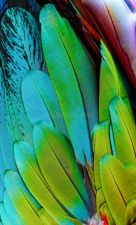 Κλείστε επάνω των φτερών του πουλιού μπλε-και-χρυσού macaw στοκ φωτογραφίες με δικαίωμα ελεύθερης χρήσης