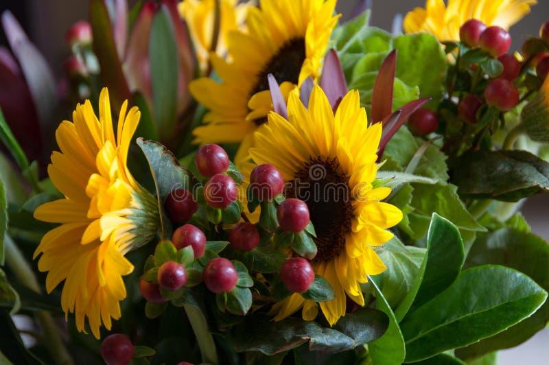 Κλείστε επάνω των φωτεινών κίτρινων λουλουδιών ηλίανθων με τα κόκκινα μούρα και τα πράσινα φύλλα στοκ εικόνα με δικαίωμα ελεύθερης χρήσης
