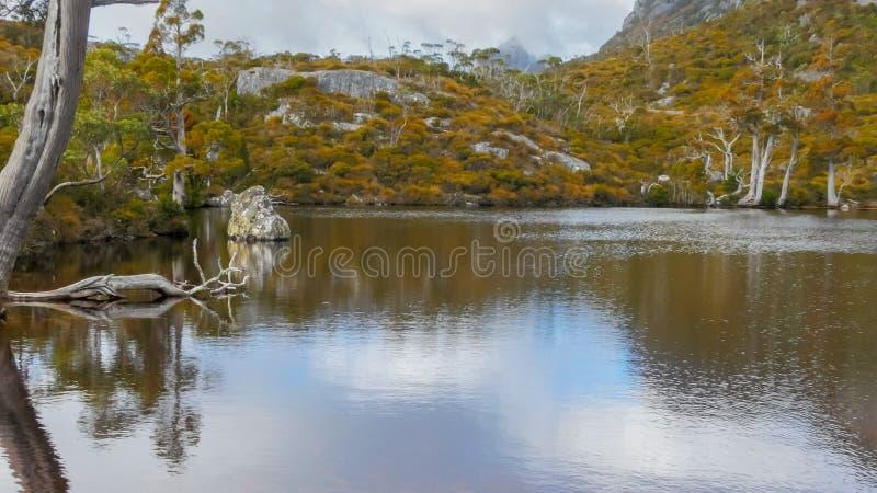 Κλείστε επάνω των χρωμάτων φθινοπώρου του nothofagus κιτρινίσματος απεικονίζεται στα ήρεμα νερά της λίμνης wombat στοκ εικόνα