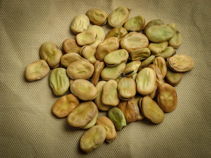 Κλείστε επάνω Vicia ευρέων φασολιών faba στο καφετί υπόβαθρο στοκ φωτογραφίες