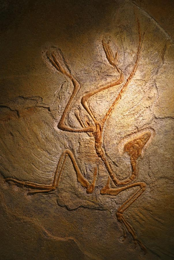 Κλείστε τα επάνω πετρώνω? απολιθωμένα υπολείμματα του αρχαιοπτερύγου στοκ εικόνες με δικαίωμα ελεύθερης χρήσης